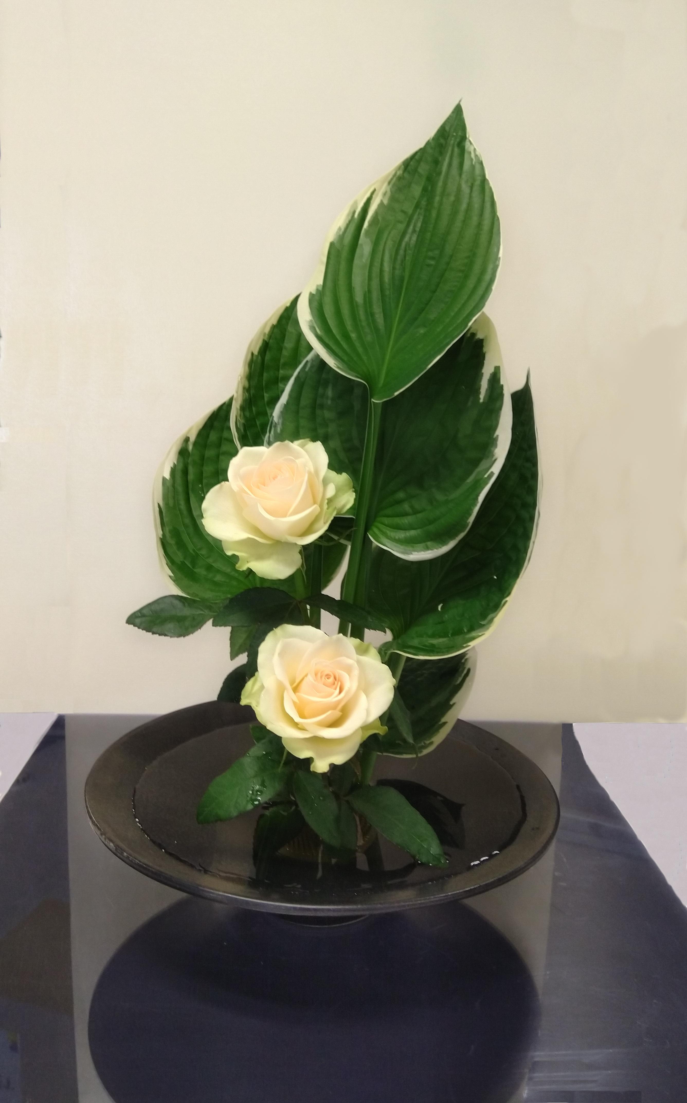 Hosta-Rose